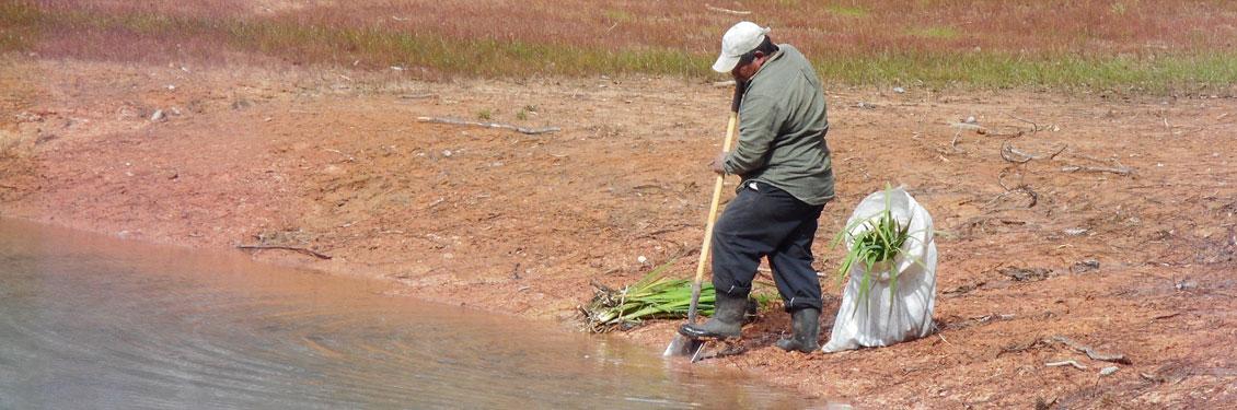 header-wetland-mitigation