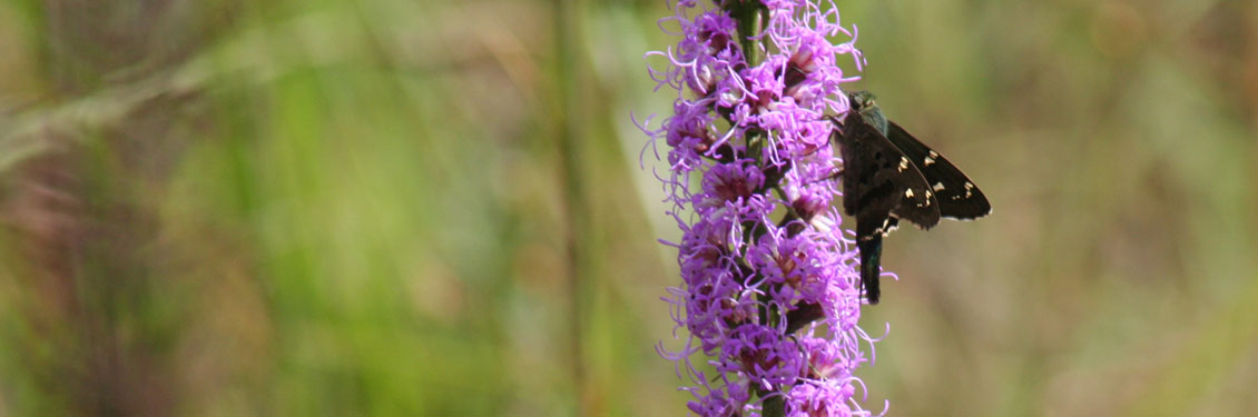 header-pollinator