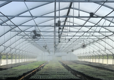Inside greenhouse with misters